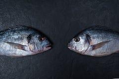 Δύο ακατέργαστα dorados στο σκοτεινό πίνακα πετρών Στοκ εικόνες με δικαίωμα ελεύθερης χρήσης