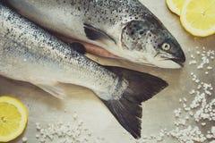 Δύο ακατέργαστα salmons Στοκ Εικόνες