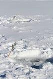 Δύο ακόμα οργάνωση γραμμών σε μια παγωμένη λίμνη Στοκ εικόνα με δικαίωμα ελεύθερης χρήσης