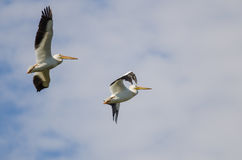 Δύο αμερικανικοί άσπροι πελεκάνοι που πετούν σε έναν νεφελώδη μπλε ουρανό Στοκ Φωτογραφία