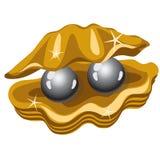 Δύο λαμπρά μαύρα μαργαριτάρια σε ένα χρυσό κιβώτιο των κοχυλιών ελεύθερη απεικόνιση δικαιώματος