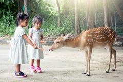 Δύο ασιατικά μικρά κορίτσια που ταΐζουν τα ελάφια στοκ εικόνα