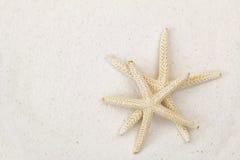 Δύο αστέρων ψάρια, γνωστά ως αστέρια θάλασσας, στην άσπρη λεπτή πλάτη παραλιών άμμου Στοκ Φωτογραφία