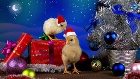 Δύο αστείοι μικροί κόκκορες στη διακόσμηση Χριστουγέννων, 2017 απόθεμα βίντεο