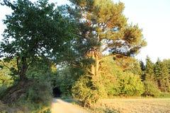 Δύο ασυνήθιστα δέντρα που αυξάνονται από έναν βρώμικο δρόμο στοκ εικόνες με δικαίωμα ελεύθερης χρήσης