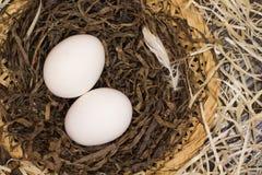 Δύο αυγά κοτόπουλου στη φωλιά Στοκ φωτογραφία με δικαίωμα ελεύθερης χρήσης