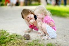 Δύο αδελφές που παίζουν με έναν σκαντζόχοιρο Στοκ Εικόνα