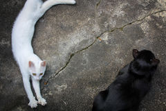 Δύο γάτα οκνηρό 1 Στοκ Εικόνα