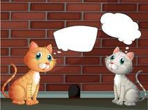 Δύο γάτες με τα κενά callouts Στοκ Εικόνες