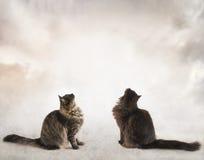 Δύο γάτες που κάθονται και που ανατρέχουν στα σύννεφα Στοκ εικόνες με δικαίωμα ελεύθερης χρήσης