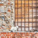 Δύο γάτες που κάθονται στον τοίχο Στοκ εικόνες με δικαίωμα ελεύθερης χρήσης