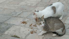 Δύο γάτες που κάθονται στο έδαφος, που τρώει τα τρόφιμα γατών υπαίθρια στο πάρκο απόθεμα βίντεο