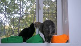 Δύο γάτες που κάθονται στο windowsill απόθεμα βίντεο