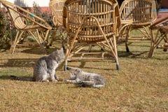 Δύο γάτες που παίζουν στο ναυπηγείο παιχνιδιού το καλοκαίρι θερινού συναισθήματος στοκ φωτογραφίες