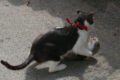 Δύο γάτες που παλεύουν στην οδό Στοκ εικόνα με δικαίωμα ελεύθερης χρήσης