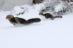 Δύο γάτες στο χιόνι στοκ εικόνα με δικαίωμα ελεύθερης χρήσης