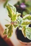 Δύο γαμήλια χρυσά δαχτυλίδια flowerpot Τα γαμήλια δαχτυλίδια στο α βγάζουν φύλλα Στοκ Εικόνα