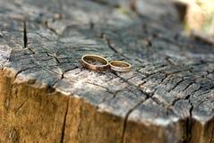 Δύο γαμήλια δαχτυλίδια στο κολόβωμα Στοκ Εικόνες