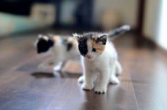 Δύο γατάκια στοκ εικόνες