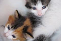 Δύο γατάκια Στοκ φωτογραφία με δικαίωμα ελεύθερης χρήσης