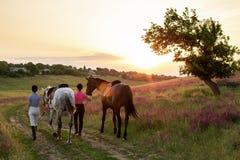 Δύο γυναίκα και δύο άλογα υπαίθριες φύση θερινού στην ευτυχή ηλιοβασιλέματος μαζί Στοκ εικόνα με δικαίωμα ελεύθερης χρήσης