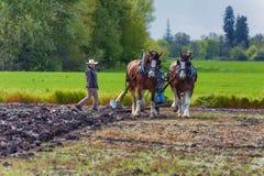 Δύο γυναίκες καθοδηγούν ένα άροτρο που τραβιέται από τα άλογα σχεδίων Στοκ Εικόνα
