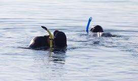 Δύο δύτες στη λίμνη Στοκ φωτογραφία με δικαίωμα ελεύθερης χρήσης