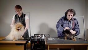 Δύο επαγγελματικά groomers που λειτουργούν με τα σκυλιά στο γραφείο φιλμ μικρού μήκους
