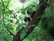 Δύο επισημασμένες νέες γάτες σπιτιών που κάθονται σε ένα ρολόι δέντρων στις διαφορετικές κατευθύνσεις στοκ φωτογραφία