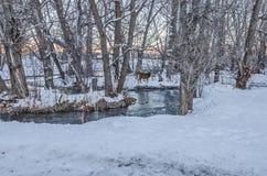 Δύο ελάφια κοντά στο νερό Στοκ Φωτογραφίες