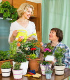 Δύο ηλικιωμένες γυναίκες με flowerpots Στοκ εικόνα με δικαίωμα ελεύθερης χρήσης