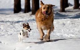 Δύο Θεοί παίζουν στο χιόνι Στοκ Εικόνα