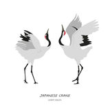 Δύο ιαπωνικοί γερανοί που χορεύουν σε ένα άσπρο υπόβαθρο Στοκ Εικόνες