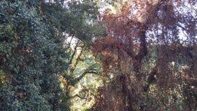 Δύο διαφορετικές περιστάσεις ενός δέντρου στοκ φωτογραφία με δικαίωμα ελεύθερης χρήσης