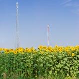 Δύο διαφορετικοί πύργοι και ηλίανθοι τηλεπικοινωνιών στο αγροτικό α Στοκ εικόνα με δικαίωμα ελεύθερης χρήσης