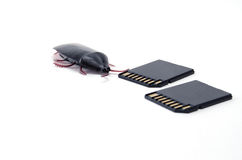 Δύο κάρτες SD με Roach Στοκ Εικόνες