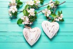 Δύο καρδιές και λουλούδια δέντρων μηλιάς στο τυρκουάζ ξύλινο backgrou Στοκ εικόνα με δικαίωμα ελεύθερης χρήσης