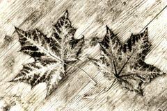 Δύο καφετιά φύλλα φθινοπώρου σε ένα ξύλινο υπόστρωμα σε γραπτό Στοκ Εικόνες
