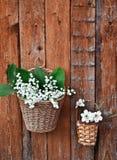 Δύο καλάθια των κρίνων και daffodils Στοκ Εικόνες
