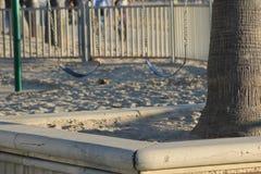 Δύο κενά καθίσματα ταλάντευσης στο αμμώδες πάρκο στοκ φωτογραφίες
