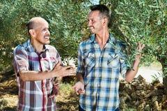 Δύο κηπουροί ατόμων που στέκονται μαζί μεταξύ των ελιών Στοκ εικόνες με δικαίωμα ελεύθερης χρήσης
