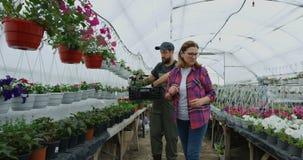 Δύο κηπουροί που επιλέγουν την πετούνια απόθεμα βίντεο