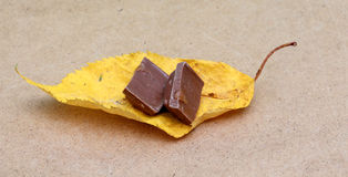 Δύο κομμάτια σοκολάτας σε ένα κίτρινο φύλλο φθινοπώρου Στοκ φωτογραφία με δικαίωμα ελεύθερης χρήσης