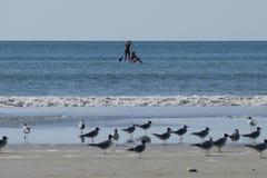 Δύο κορίτσια σε έναν κουπί-πίνακα με seagulls στην παραλία στοκ εικόνες