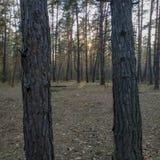 Δύο κορμοί δέντρων ως πλαίσιο στοκ εικόνες με δικαίωμα ελεύθερης χρήσης