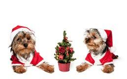 Δύο κουτάβια στα κόκκινα καπέλα Santa στοκ εικόνες