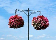 Δύο κρεμώντας καλάθια των ρόδινων bergonias Στοκ εικόνες με δικαίωμα ελεύθερης χρήσης