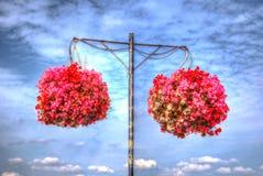 Δύο κρεμώντας καλάθια των bergonias με το μπλε ουρανό και τα άσπρα σύννεφα Στοκ Εικόνα
