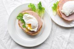 Δύο κυνήγησαν λαθραία αυγά Στοκ Εικόνες