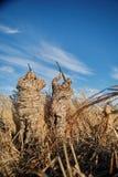 Δύο κυνηγοί υδρόβιων πουλιών που στοχεύουν στον ουρανό με τα τουφέκια Στοκ εικόνες με δικαίωμα ελεύθερης χρήσης